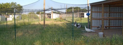crescatorie fazani