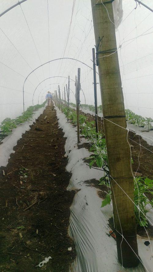 Plasa pentru sere - suport plante