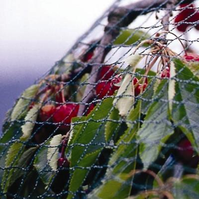 Detaliu plasa de protectie pasari pomi fructiferi