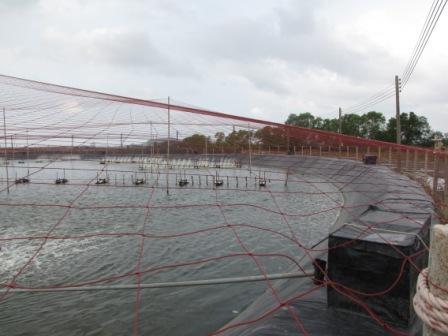 plase protectie pasari piscicultura